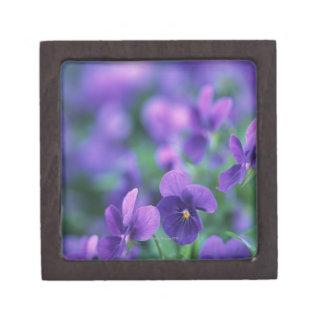 Viola Premium Jewelry Boxes