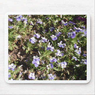 Viola 'Sorbet Delft Blue' Mouse Pad