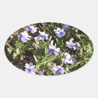 Viola 'Sorbet Delft Blue' Sticker