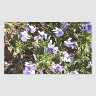 Viola 'Sorbet Delft Blue' Rectangular Stickers