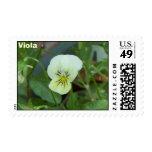 Viola Stamp