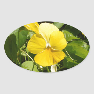 Viola 'Swiss Giant Yellow' Oval Sticker
