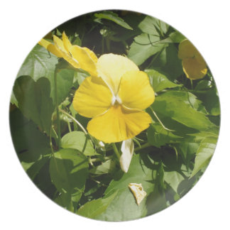 Viola 'Swiss Giant Yellow' Party Plates