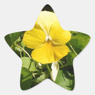 Viola 'Swiss Giant Yellow' Star Stickers