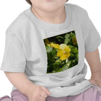 Viola 'Swiss Giant Yellow' Shirt