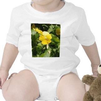 Viola 'Swiss Giant Yellow' Romper