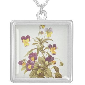 Viola tricolora collar