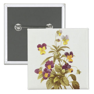 Viola tricolora pin cuadrado