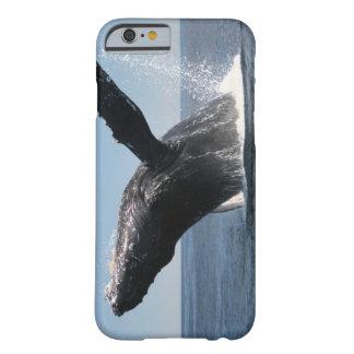 Violación adulta de la ballena jorobada funda barely there iPhone 6