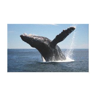 Violación adulta de la ballena jorobada impresión en lienzo