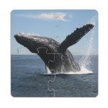 Violación adulta de la ballena jorobada posavasos de puzzle