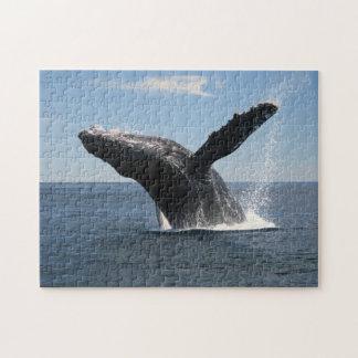 Violación adulta de la ballena jorobada puzzles con fotos