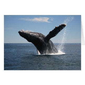 Violación adulta de la ballena jorobada tarjeta de felicitación