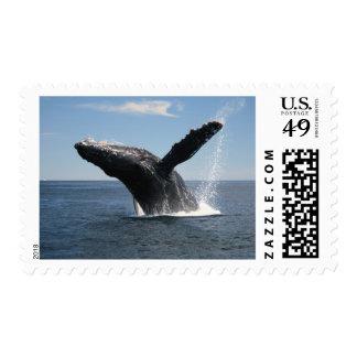 Violación adulta de la ballena jorobada timbre postal
