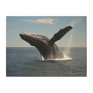 Violación adulta de la ballena jorobada impresiones en madera