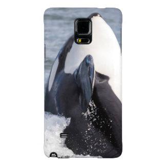 Violación de la ballena de la orca
