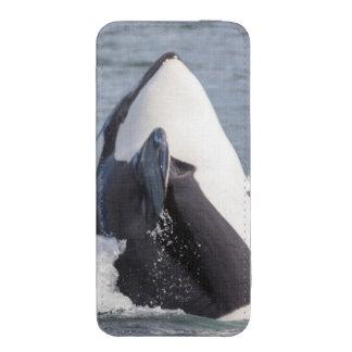 Violación de la ballena de la orca bolsillo para iPhone