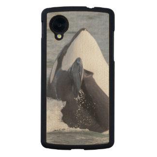 Violación de la ballena de la orca funda de nexus 5 carved® de arce