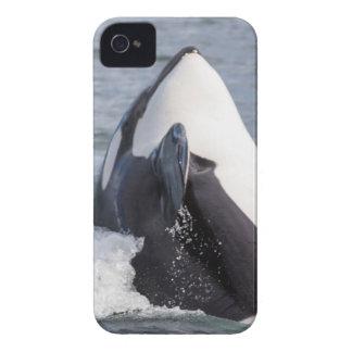 Violación de la ballena de la orca funda para iPhone 4 de Case-Mate