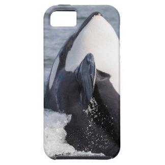 Violación de la ballena de la orca iPhone 5 carcasas