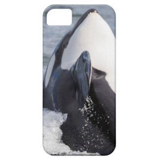 Violación de la ballena de la orca iPhone 5 funda