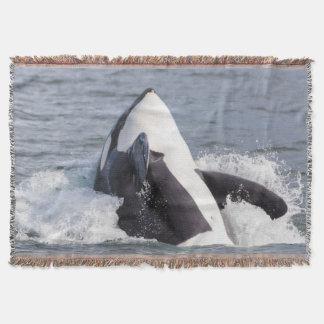 Violación de la ballena de la orca manta