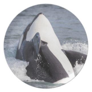 Violación de la ballena de la orca platos para fiestas