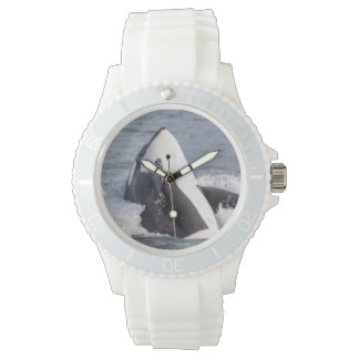 Violación de la ballena de la orca relojes de pulsera