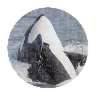 Violación de la ballena de la orca tablas para cortar