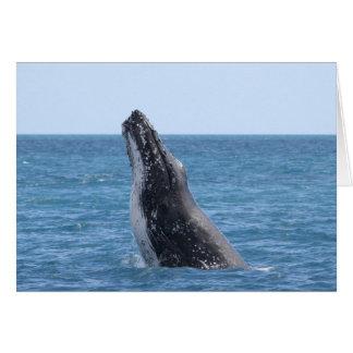 Violación de la ballena felicitacion