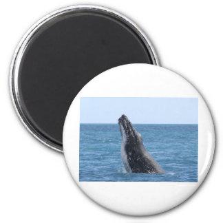 Violación de la ballena imán