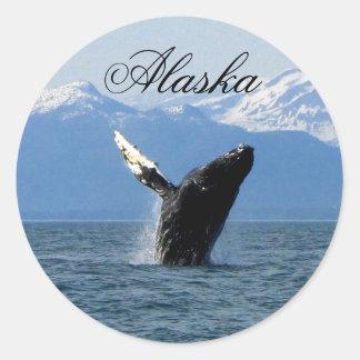 Violación de la ballena jorobada; Alaska Etiqueta Redonda
