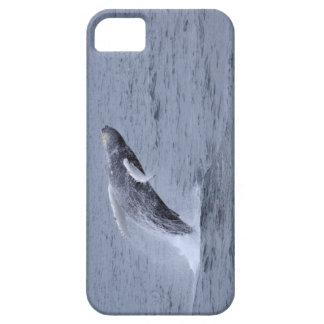 Violación de la ballena jorobada de la casamata de funda para iPhone SE/5/5s
