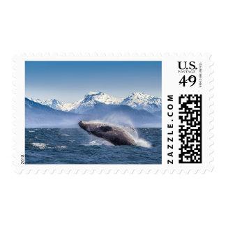 Violación de la ballena jorobada en Alaska Estampilla