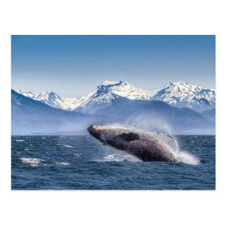 Violación de la ballena jorobada en Alaska Postales
