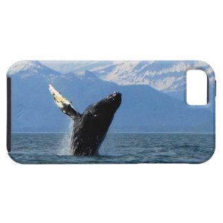 Violación de la ballena jorobada iPhone 5 carcasa
