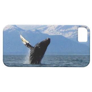 Violación de la ballena jorobada iPhone 5 carcasas