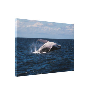 Violación de la ballena jorobada - lona envuelta impresión en lienzo
