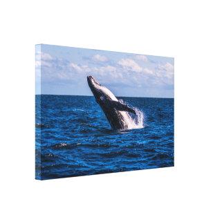 Violación de la ballena jorobada - lona envuelta impresiones en lona