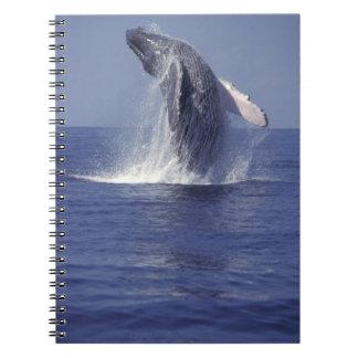 Violación de la ballena jorobada (Megaptera Libro De Apuntes Con Espiral