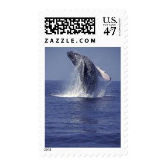 Violación de la ballena jorobada (Megaptera Sellos