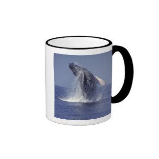 Violación de la ballena jorobada (Megaptera Taza A Dos Colores