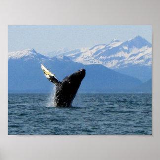 Violación de la ballena jorobada posters