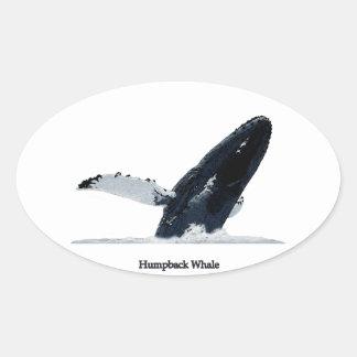 Violación de la ballena jorobada calcomania de óval