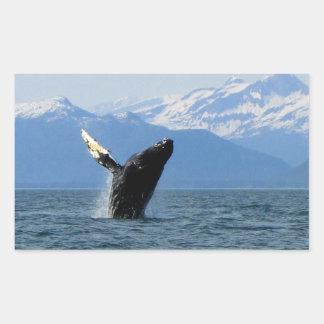 Violación de la ballena jorobada rectangular pegatinas
