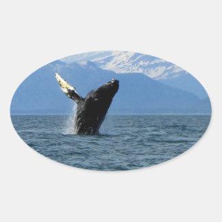 Violación de la ballena jorobada pegatinas ovales