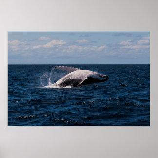Violación de la ballena jorobada - poster póster