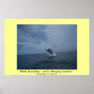¡Violación de la ballena - la creación asombrosa d Póster