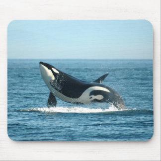 Violación de la ballena Mousepad