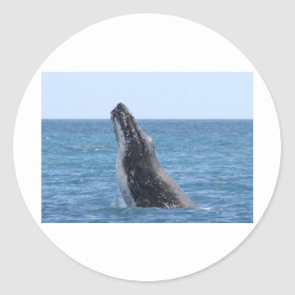 Violación de la ballena etiqueta redonda